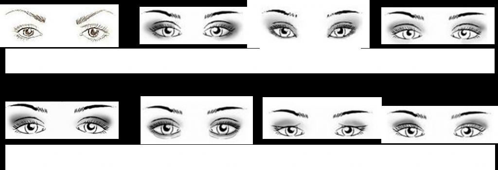Crease and Contour Eyeshadow: Asian Eyes VS Caucasian Eyes   Bun Bun Makeup Tips and Beauty Product Reviews