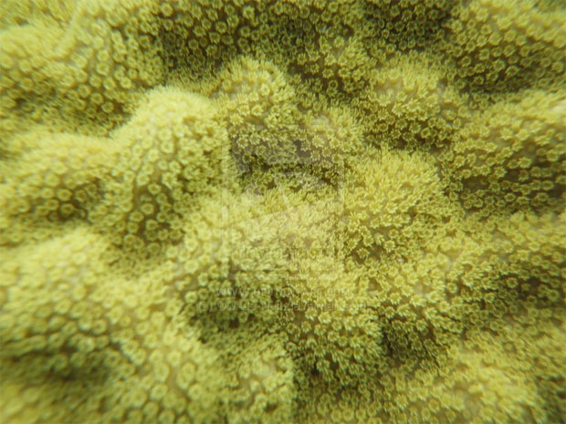 corals-on-my-face-2