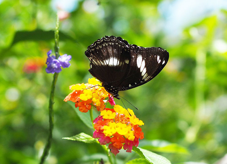 Things-To-Do-In-Davao_Eden-Nature-Park_Butterfly-Garden