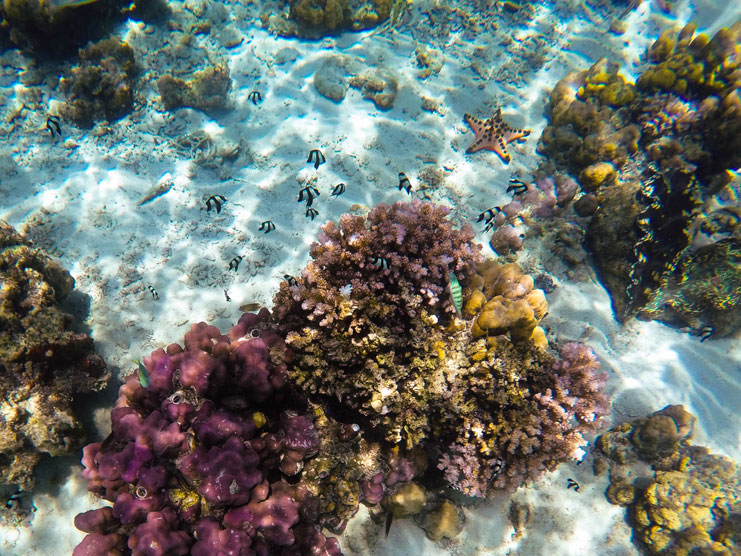Things-To-Do-In-Davao_Samal-Island-Snorkelling