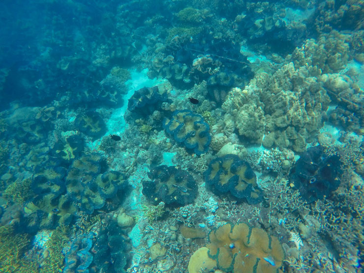 Things-To-Do-In-Davao_Samal-Island-Snorkelling_giant-clams