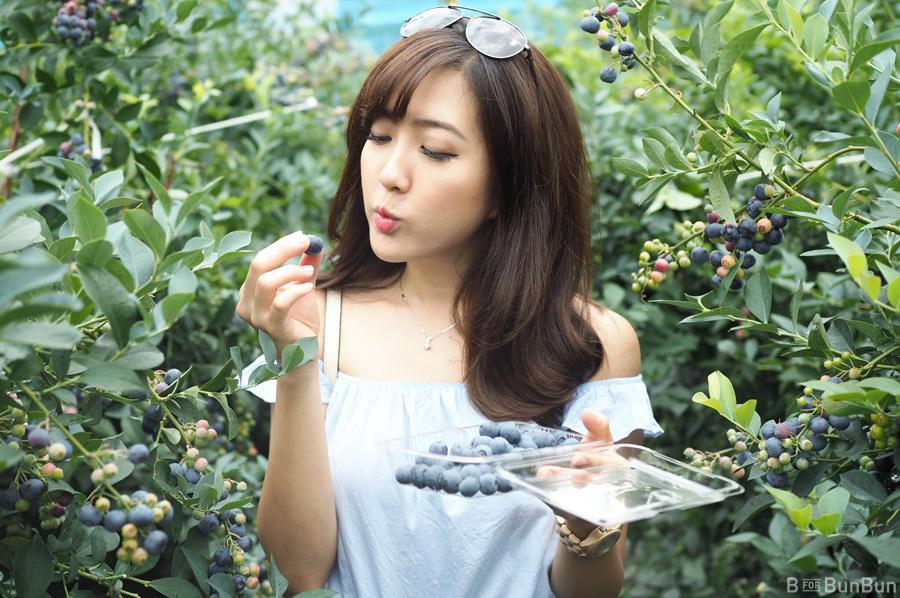 Yokohama-Blueberry-Farm-Harvest_1.1