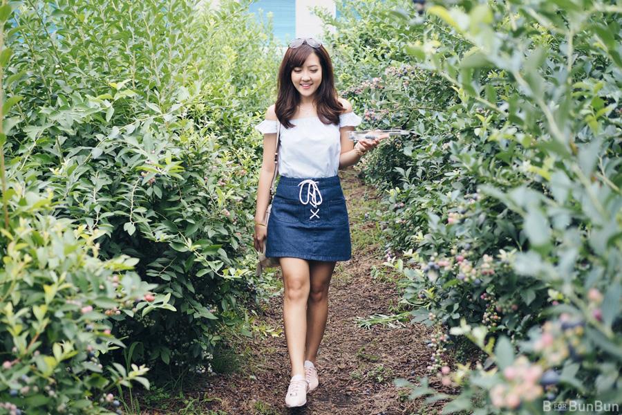 Yokohama-Blueberry-Farm-Harvest_12.1