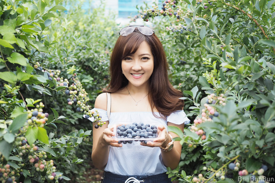 Yokohama-Blueberry-Farm-Harvest_13