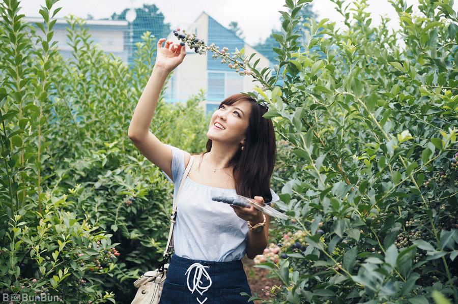 Yokohama-Blueberry-Farm-Harvest_5